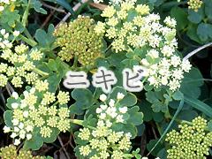 ニキビとは、ニキビのタイプと漢方養生